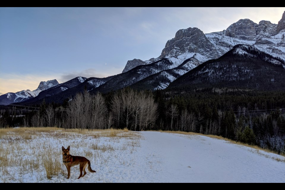 Kevin the dog poses on a portion of the one-kilometer loop at the Quarry Lake off-leash dog park. ALANA MACLEOD RMO PHOTO