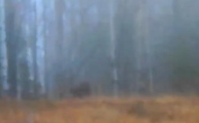 Screen Shot 2020-10-27 at 7.07.32 PM