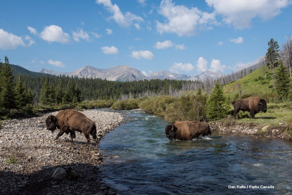 Bison Release Selects_20180728-_DSC0971_DRafla Photos_LOWRES