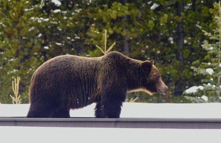Bear 122 on CP tracks.
