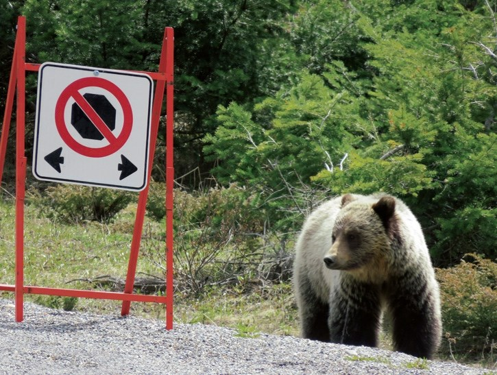 Banff National Park staff deal with multiple bear-related incidents over the weekend. Motorists along Highway 93 South are subject to a no stopping zone currently due to