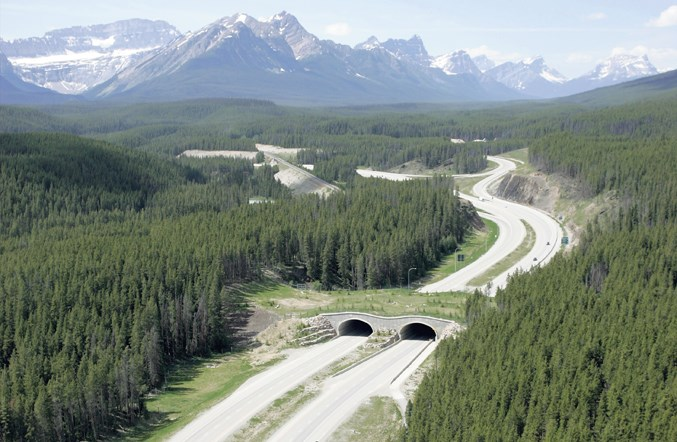 wildlife_overpass_aerial7517crop
