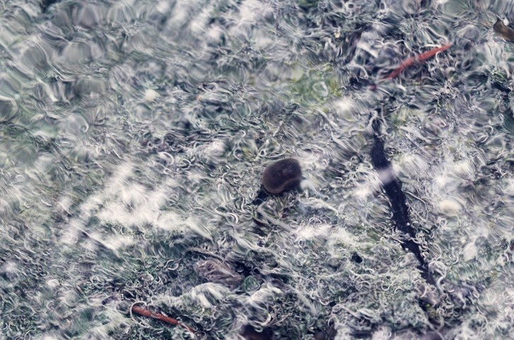 Banff Snails