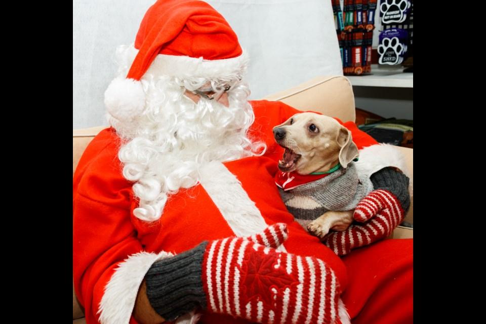 Sawyer, 9, meets Santa, Jeff Mitchell, at the Banff Doghouse Bow Valley SPCA fundraiser on Sunday (Dec. 1). CHELSEA KEMP RMO PHOTO