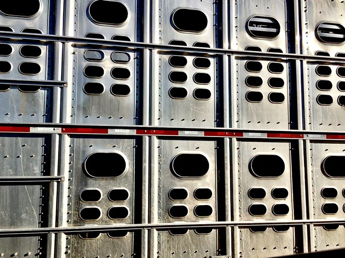 cattle liner truck