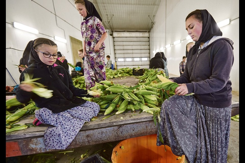 Alexia and Kaitlin Walter husk corn to be canned in the kitchen.