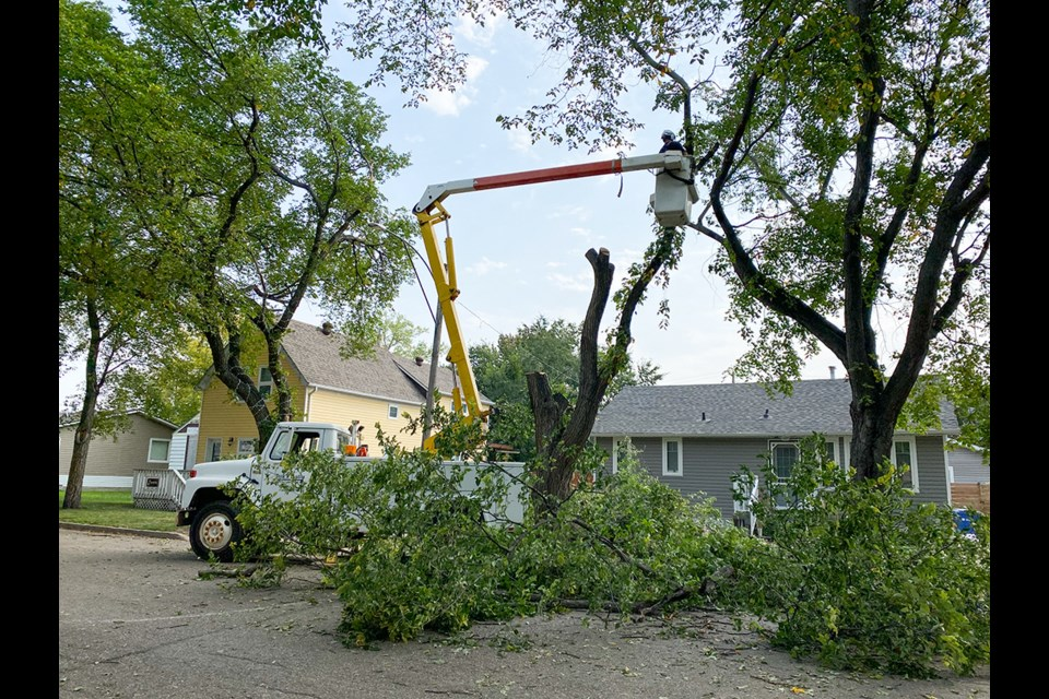 Dutch elm disease has been rampant this year in all corners of Saskatchewan and the town of Carlyle was not spared. Crews removed a tree from Second Street West in Carlyle.