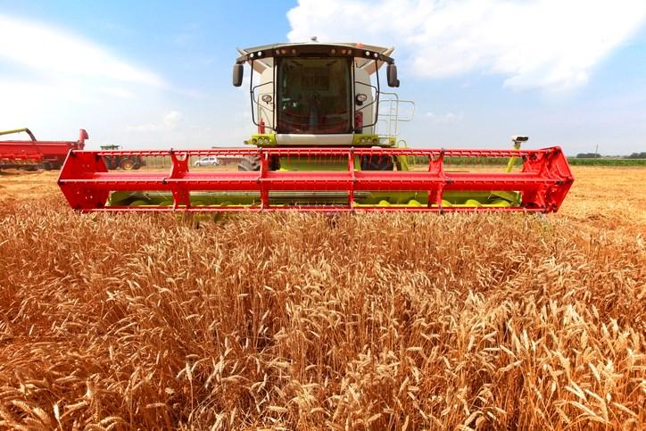straight combining harvest