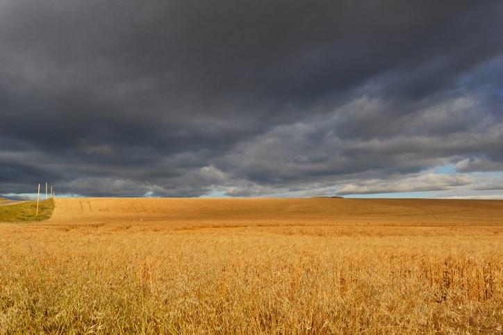 rainclouds harvest