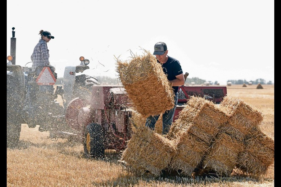 Tanya and Dwight Odelein of Quill Lake, Sask., stook freshly harvested barley straw using an old square baler.
