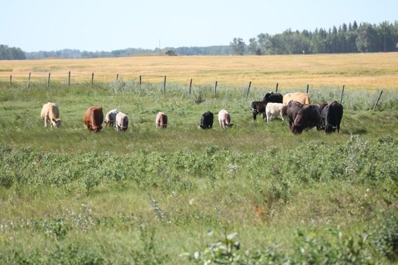 The drought is impacting livestock pasture and hay lands too.