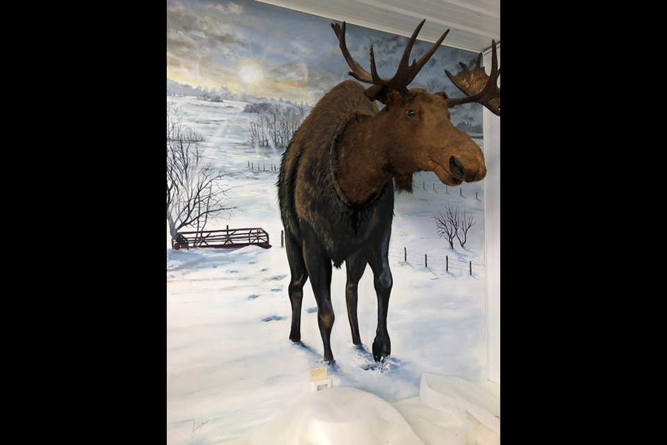 Luseland's local artist, Jared Fischer, recently completed this remarkable mural at the local museum.