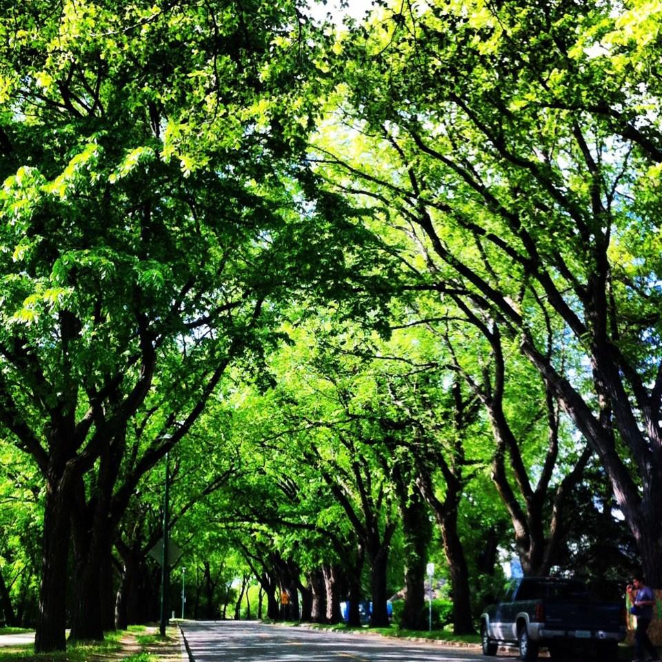 trees on spadina