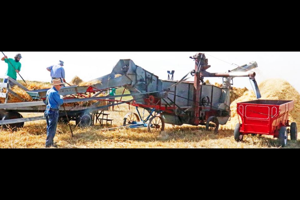 A demonstration of old-time harvesting was done at the Glen Stomp farm at Griffin on Sunday, with spring wheat in stooks, gathered in hay racks, and fed through this threshing machine.
