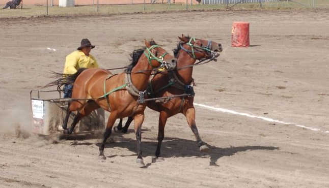 Kelvin Young of Weekes got a good start in this chariot race.