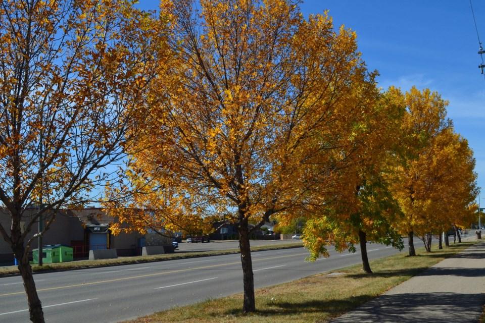 Fall in Estevan
