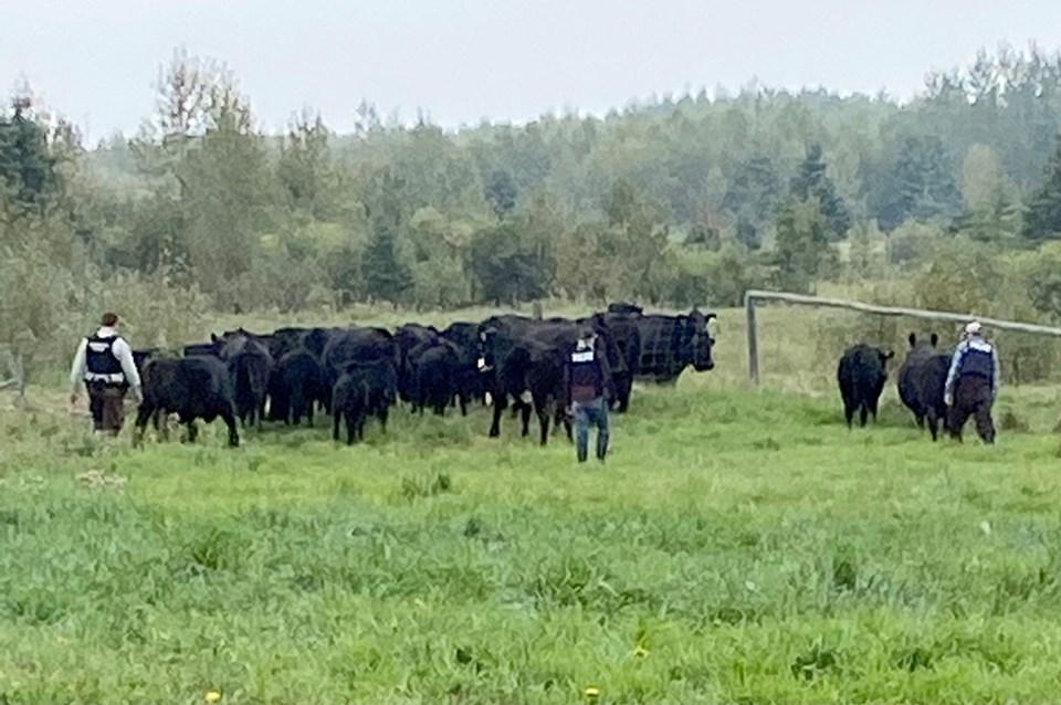 spiritwood Herd