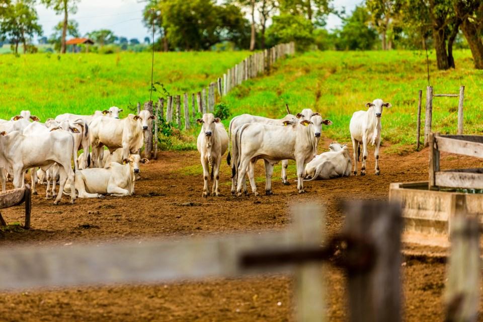 Brazilian Cattle Ranch