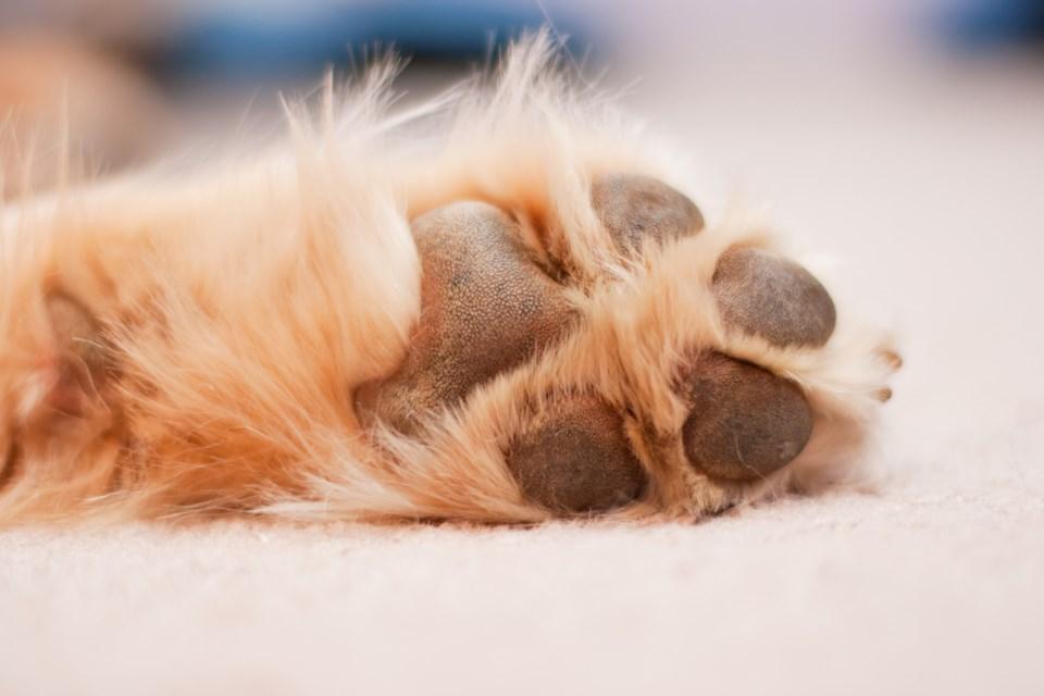 dog paw shutterstock