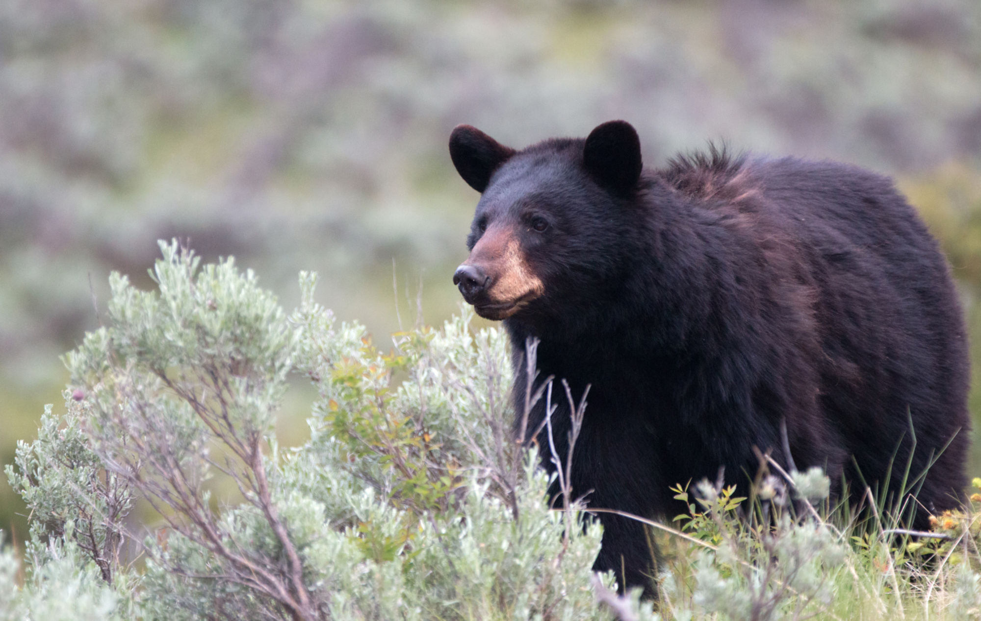 CANADA: Winnipeg man fends off bear in northwestern Ontario woods by kicking it in the stomach