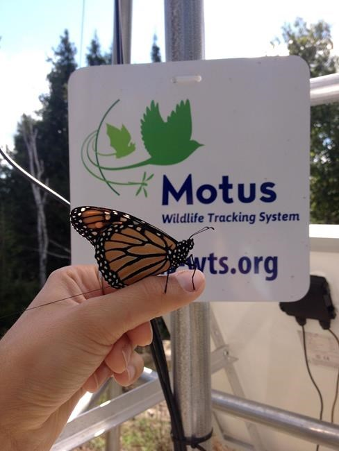 monarch-tracking_107322