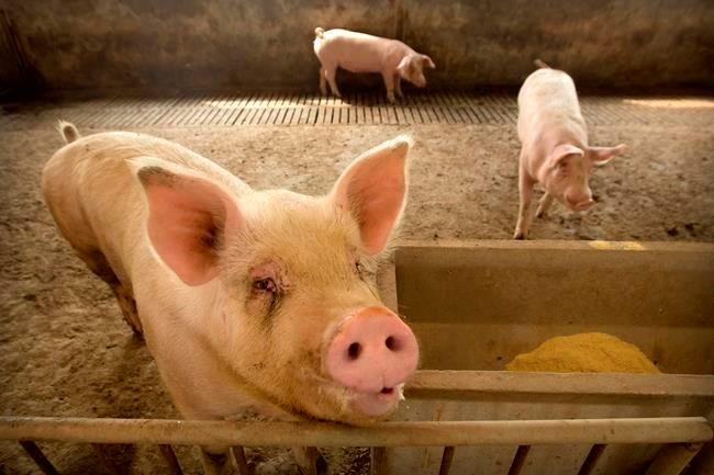 China food prices jump despite effort to ease pork shortage