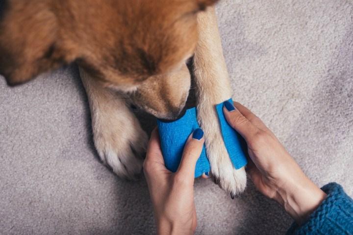 dog-paw-injury
