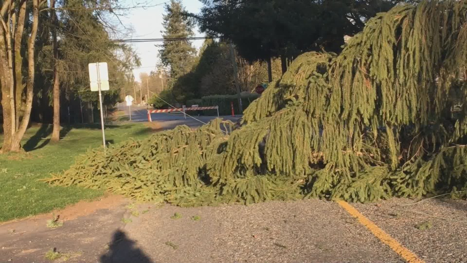 tree-down-wind