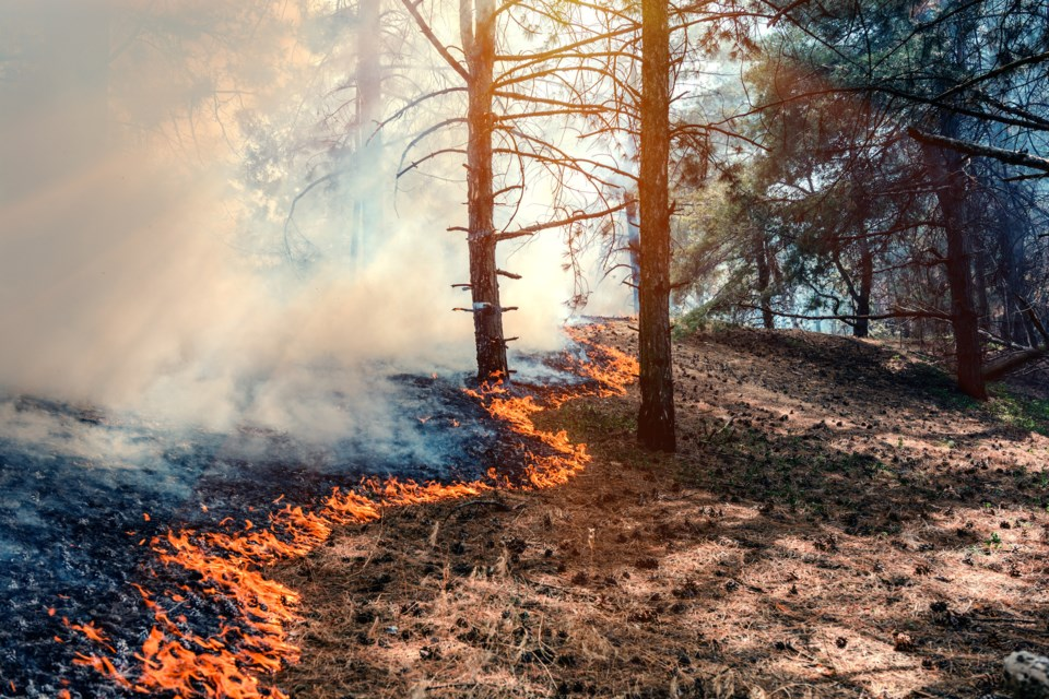 forest fire AdobeStock_185098544