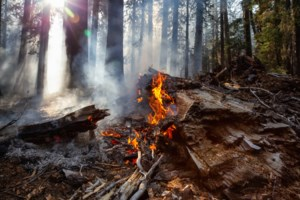 Five new fires in the northeast region