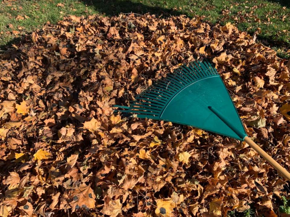 USED 2020-11-13 Rake leaves