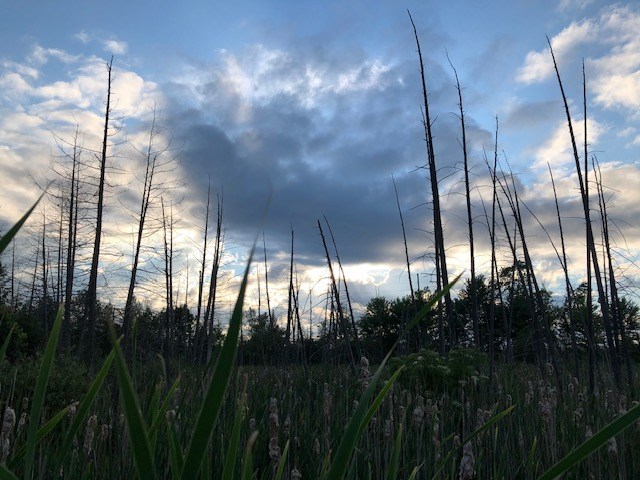 USED 2021-07-07 Bear Creek Eco Park MBo 6