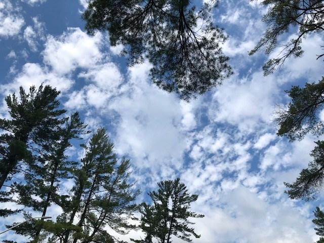 USED 2021-07-07 Bear Creek Eco Park MBo 7