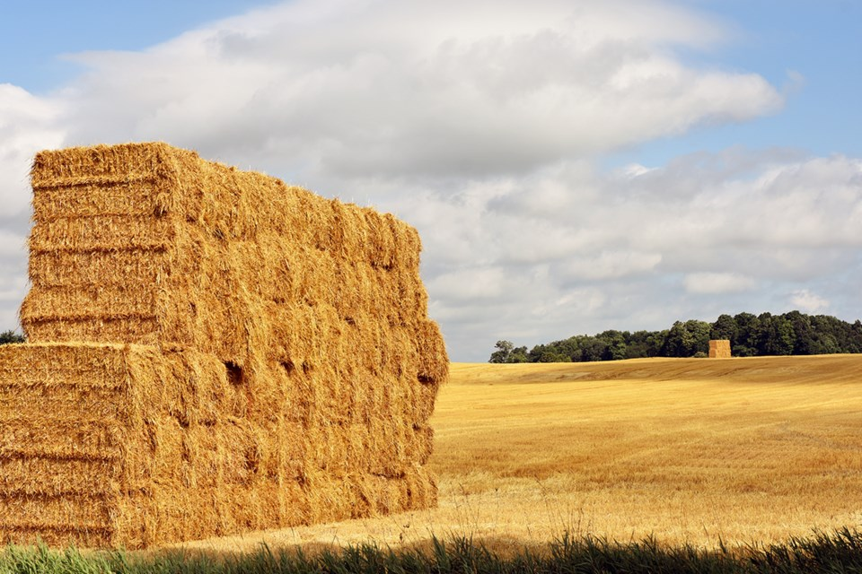 USED 2018-07-24-hay