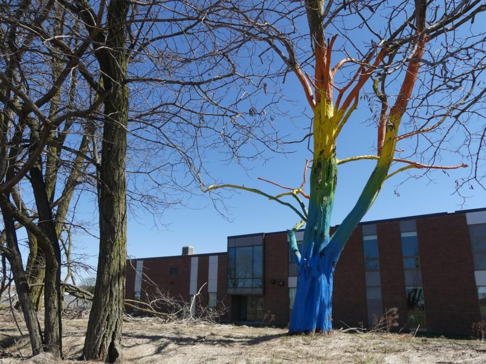 USEDRainbow tree