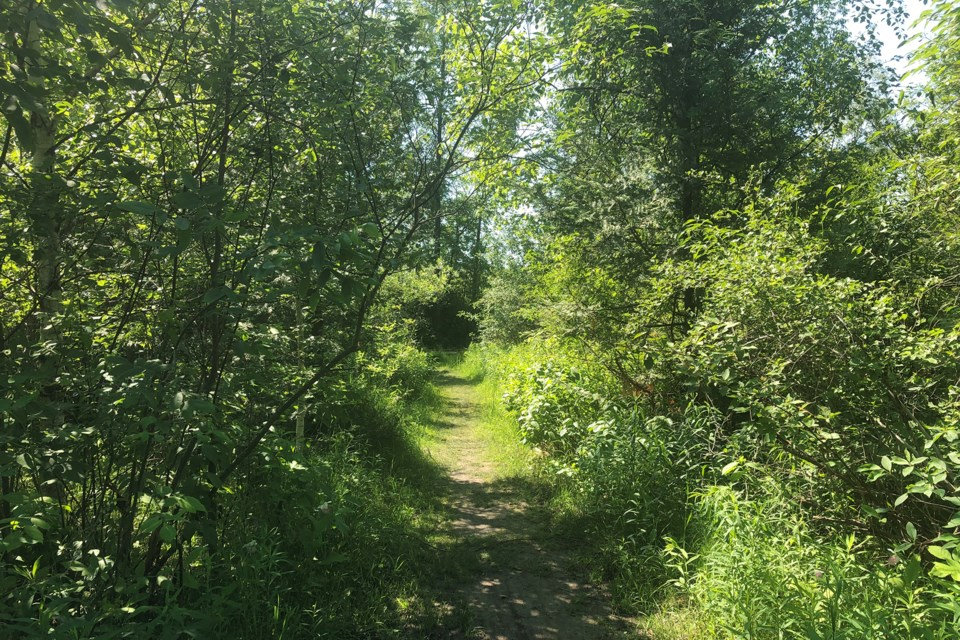 A nature trail in Collingwood. Ticks like to hang out in wooded areas with tall grass.  Erika Engel/CollingwoodToday