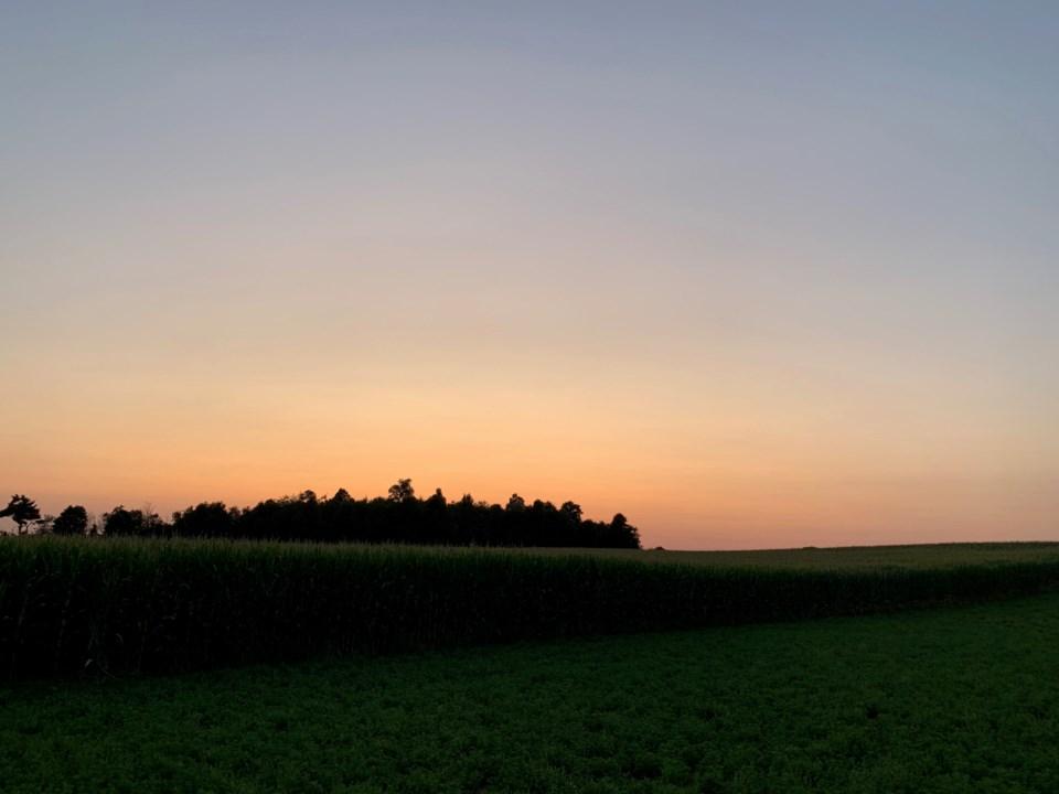 A corn field at dusk (August 9th, 2019)