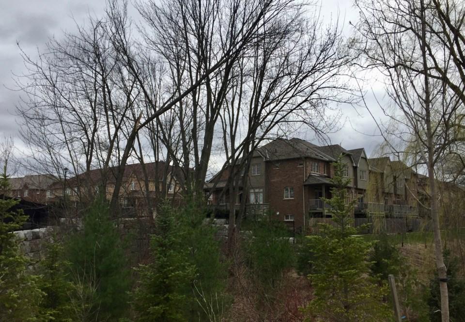 USED 2019 04 26 damaged tree Harry Syratt Ave DK