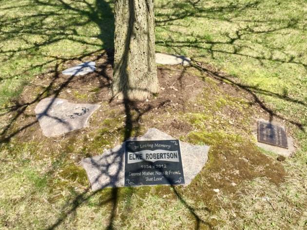 USED 2019 05 14 tree plaque DK