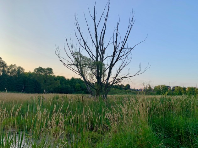 USED2019 08 22 LONELY TREE DK