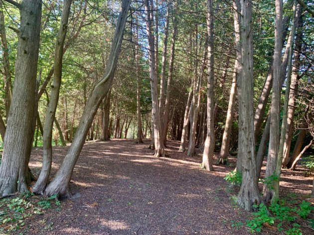 USED 2019 09 06  sun dappled forest DK