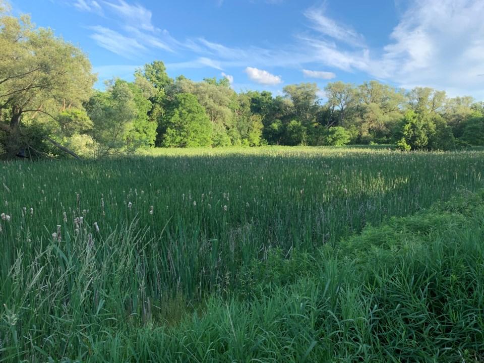 USED 2020 06 27 trail grasslands DK