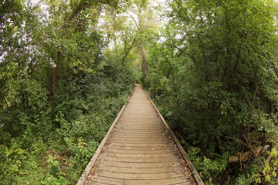 USED 2020 09 22 Tom Taylor Trail boardwalk GK
