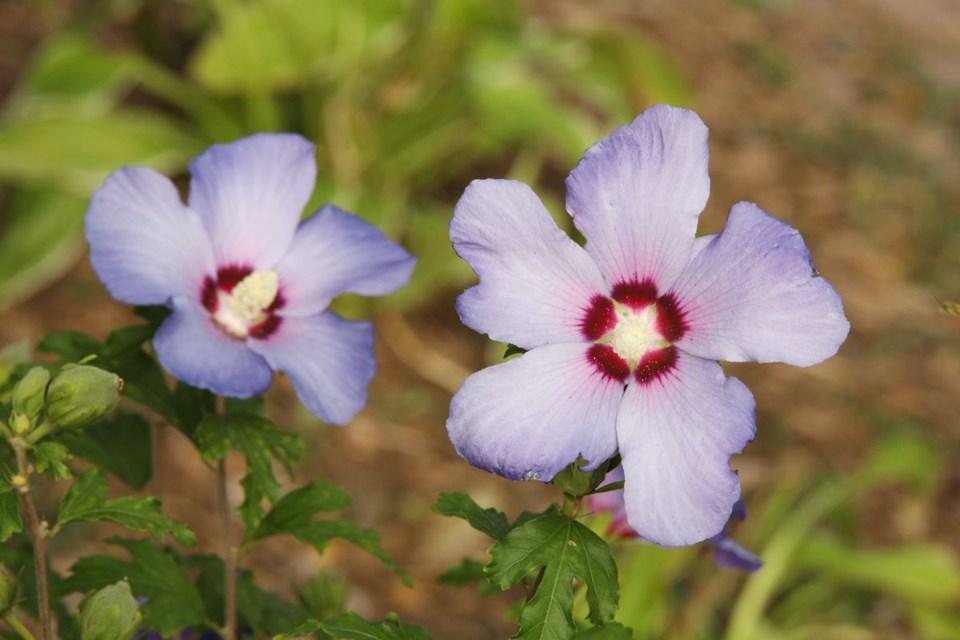 USED 2020 09 22 trading tree flowers