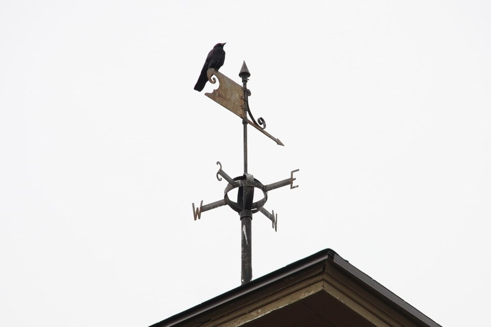 USED 2020 11 16 crow at the Clock Tower GK