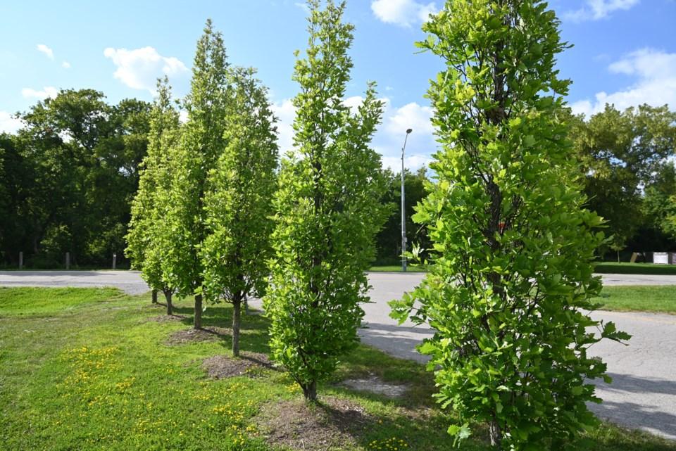 USED 2021-09-05-George Richardson Park-JQ-2