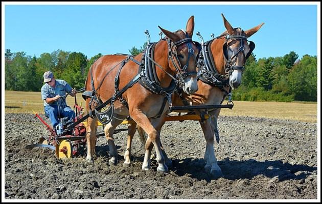 USED 20-09-19goodmorningbct 5  Verner plowing contest courtesy of Zeke Johnson