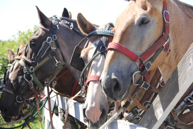 USED 2019-09-19goodmorningnorthbaybct  7 Waiting our turn. Powassan Fall Fair. Photo by Brenda Turl for BayToday.