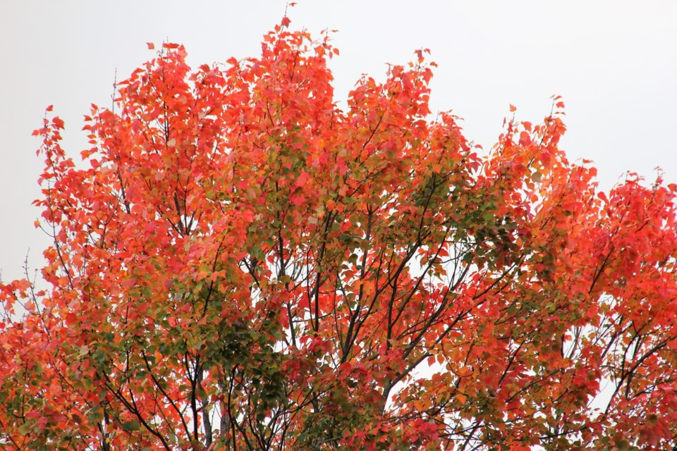 USED 2019-10-10goodmorningnorthbaybct  7 Brilliant colour. Photo by Brenda Turl for BayToday.