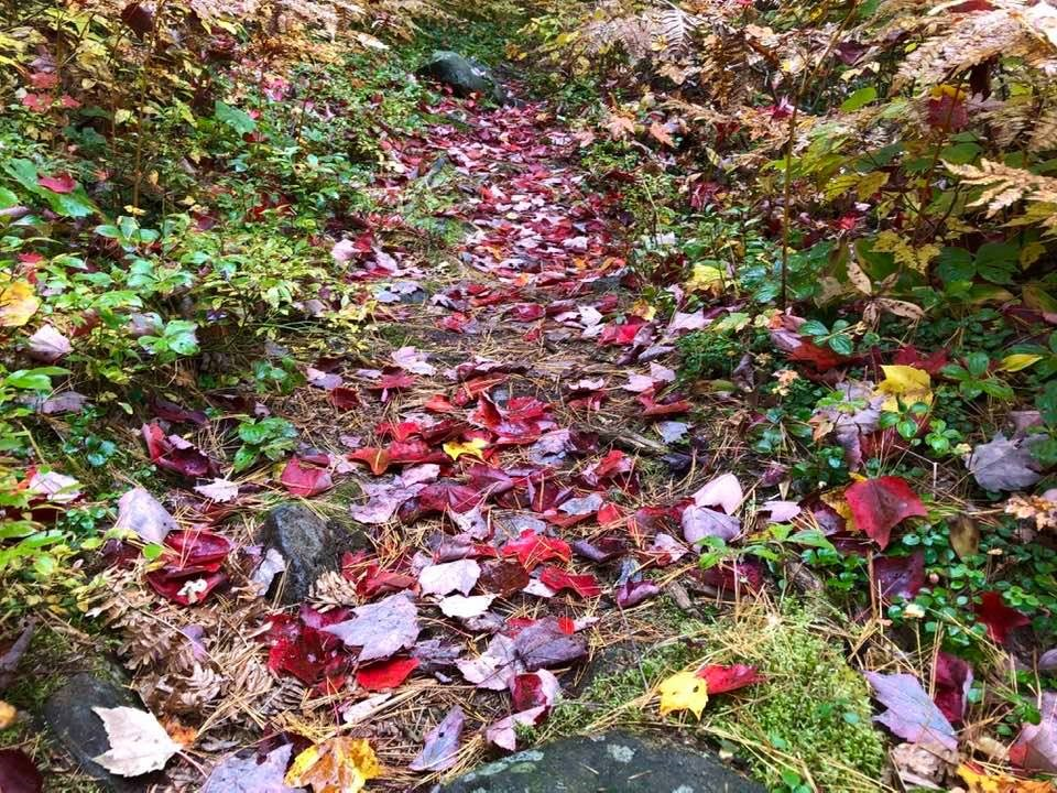 USED 2020-10-12goodmorningnorthbaybct  7 Fallen leaves on the trail. Marten River. Courtesy of Sue Nielsen.